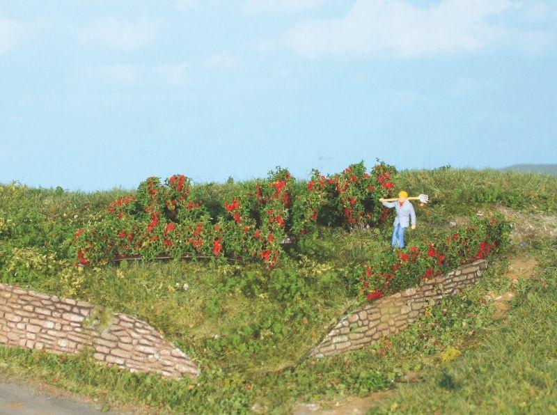 10 Rosenhecken und Büsche 0,7 - 3 cm