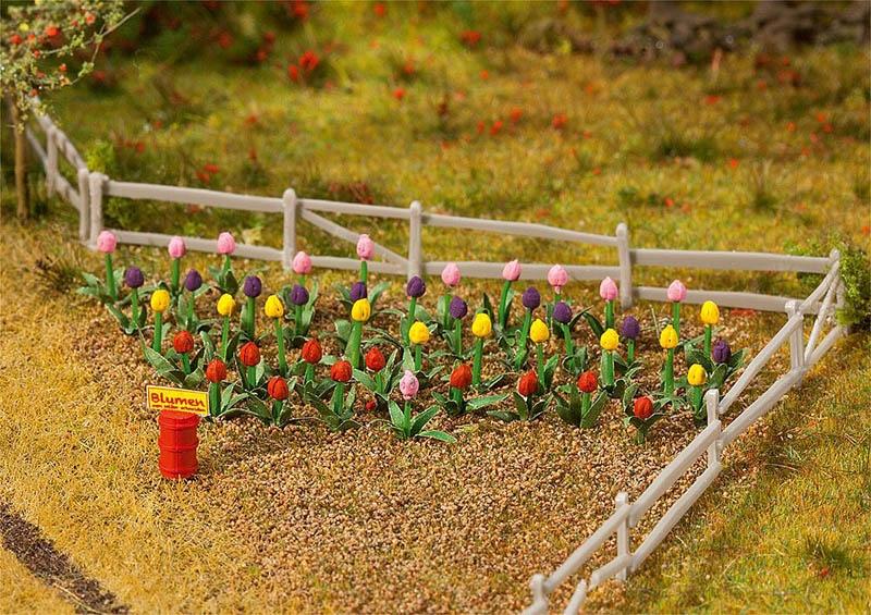 36 Tulpen H0