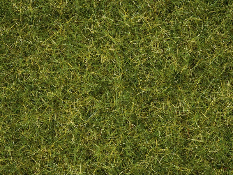 Master-Grasmischung Sommerwiese, 2,5 bis 6 mm, 50 g