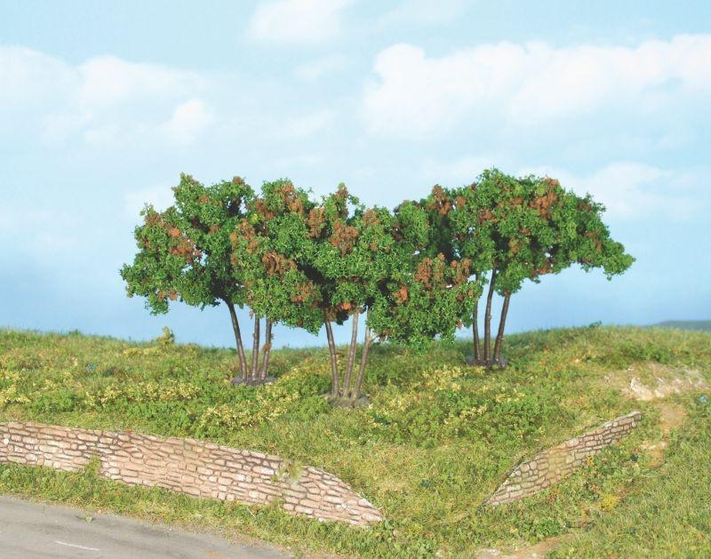 3 Maulbeerbäume 7 cm