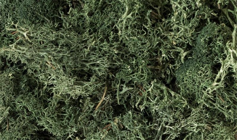 Islandmoos, dunkelgrün, 1,41 dm³