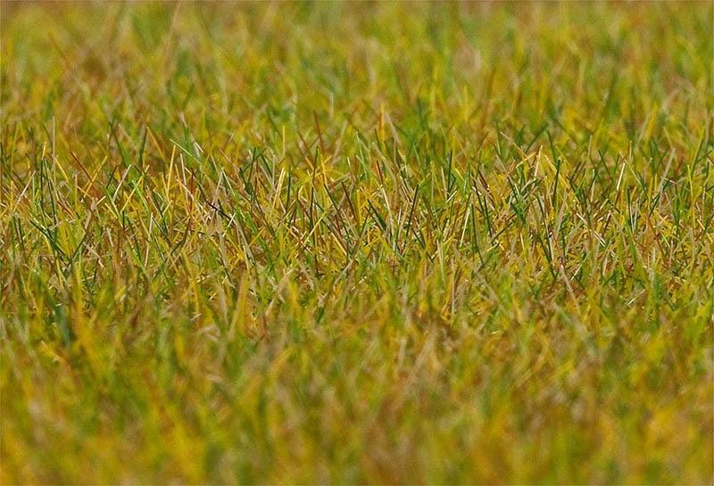 PREMIUM Streufasern Wiese, hellgrün, 6 mm, 30 g H0, TT, N