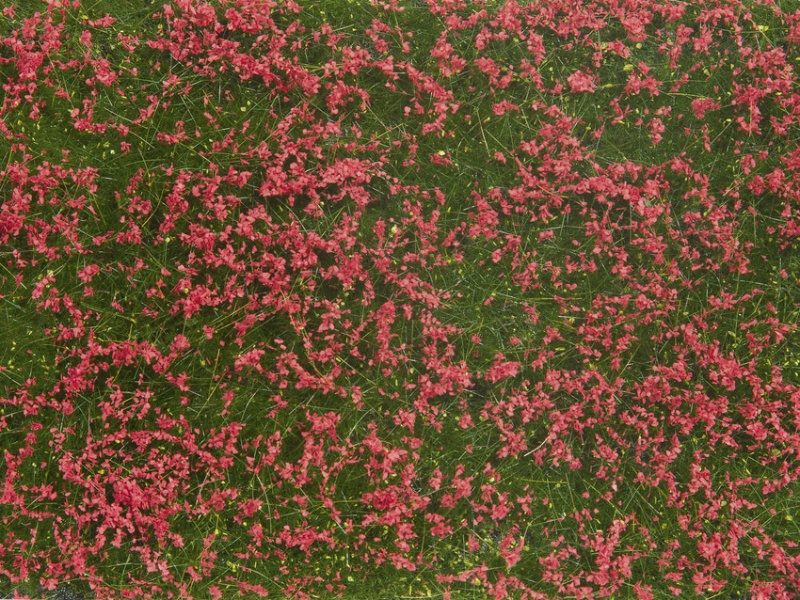 Bodendecker-Foliage Wiese rot 12 x 18 cm