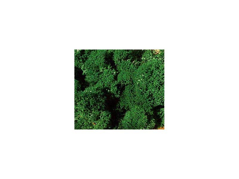 Islandmoos dunkelgrün 30 g