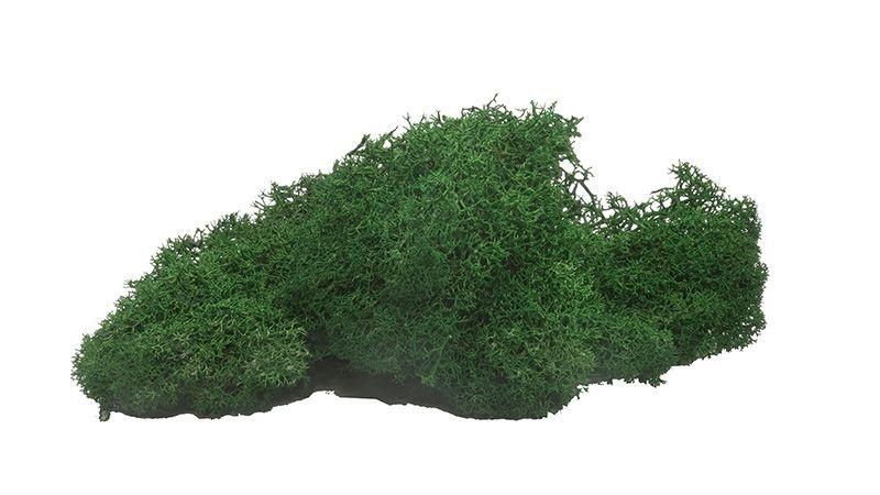 Moos dunkelgrün, 40 g