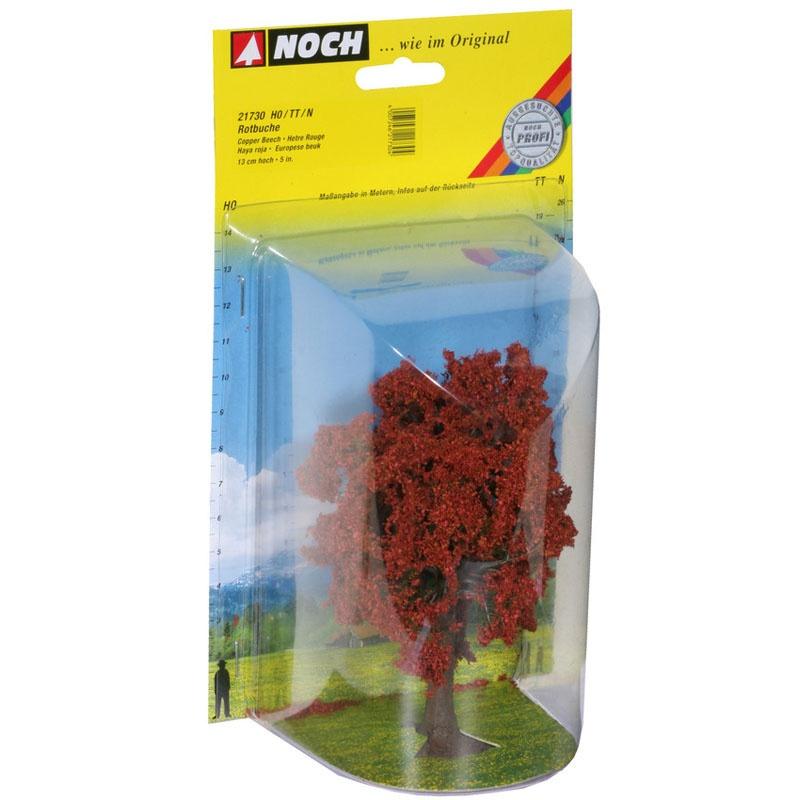 Rotbuche Baum 13 cm