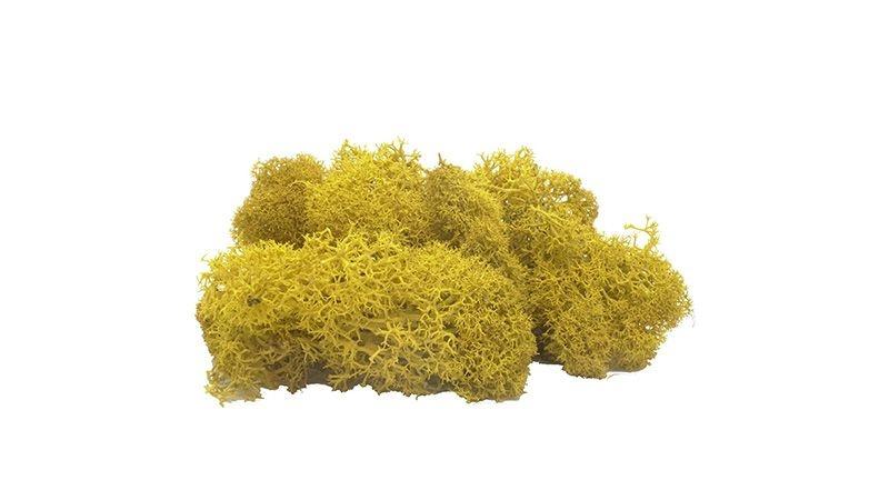 Moos gelb, 40 g