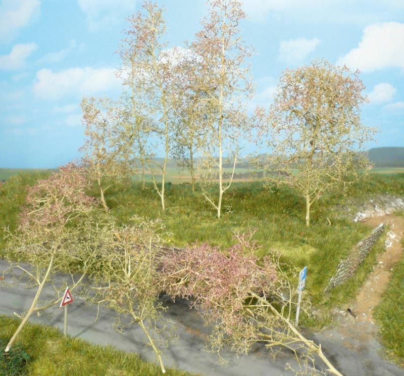 35 Bäume, Seemoos natur