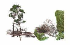 Bäume, Büsche und Pflanzen