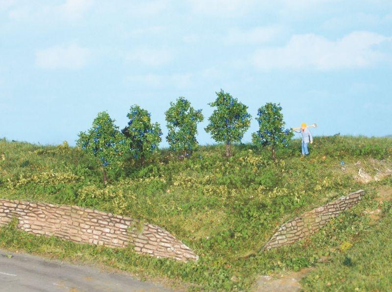 5 Zwetschgenbäume 4 cm