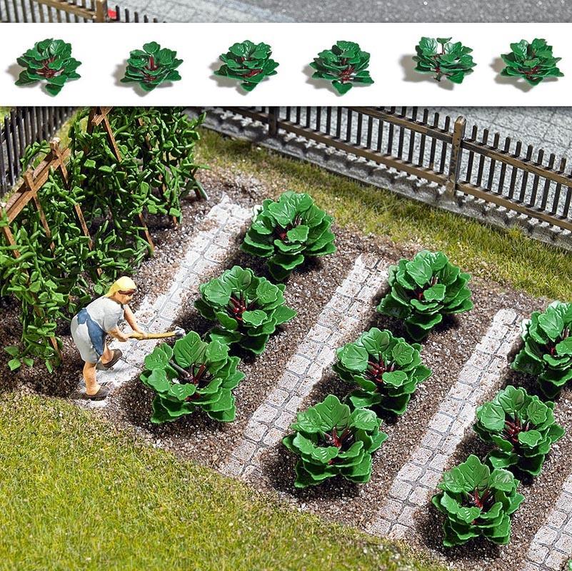 Rhabarber Pflanzen, Spur H0