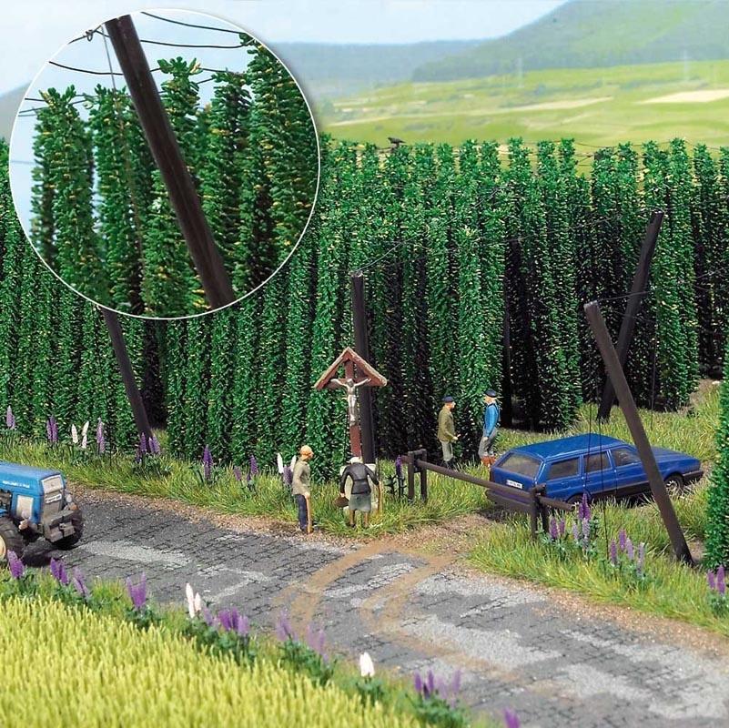 Hopfenpflanzen, Spur H0